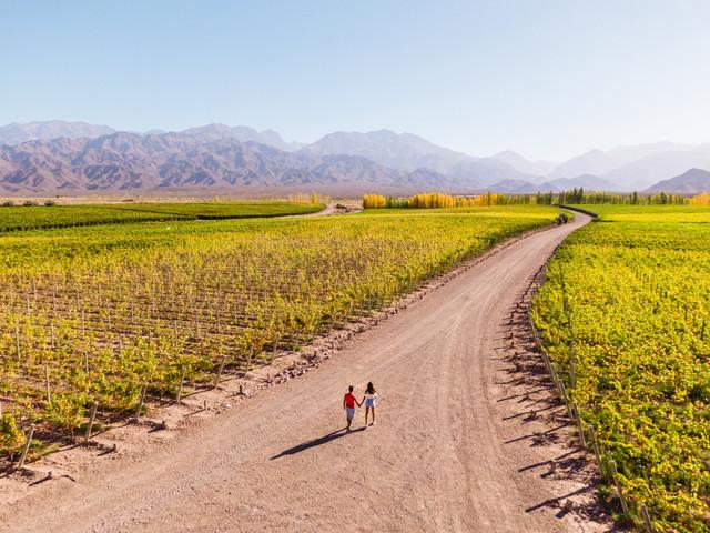 Ruta del vino para la luna de miel: un viaje de aromas increíbles