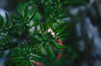Alianzas de oro: consejos para elegir las perfectas para ustedes