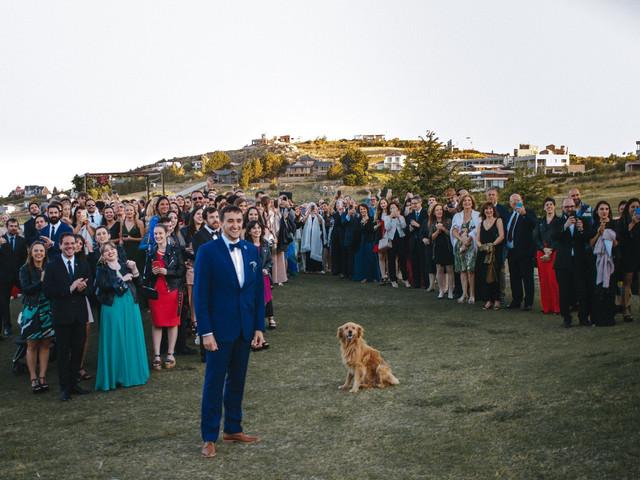 ¿Qué hacer con su mascota el día de tu casamiento? 6 alternativas