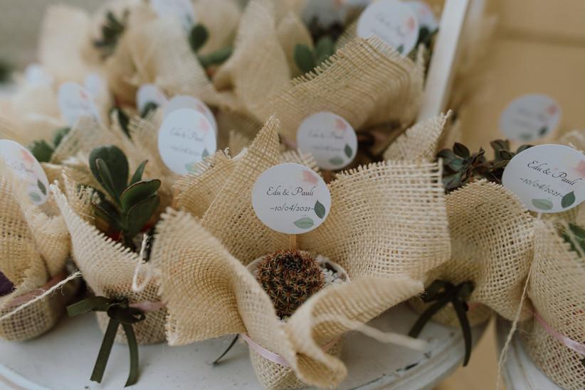 souvenirs casamiento plantitas