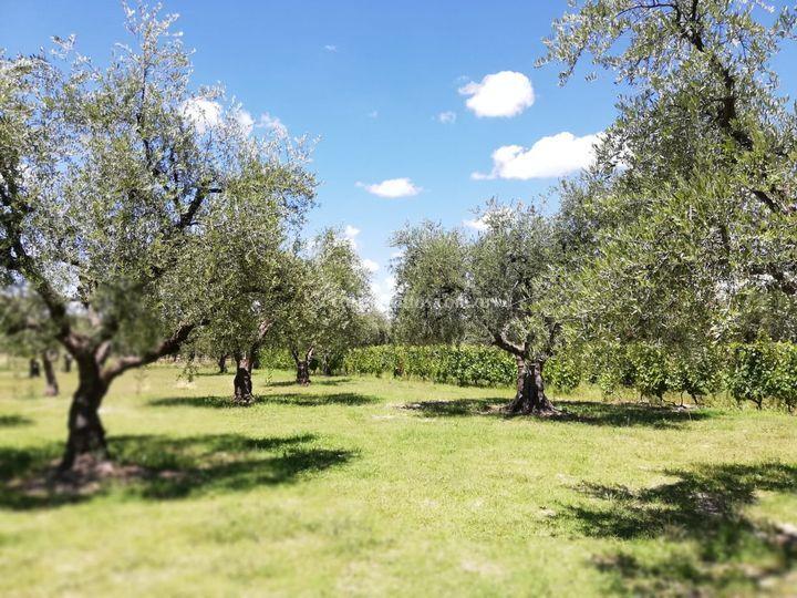 Parque olivos