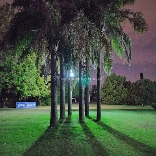 Resto Golf - Palmeras