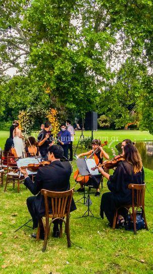 Violines para casamientos