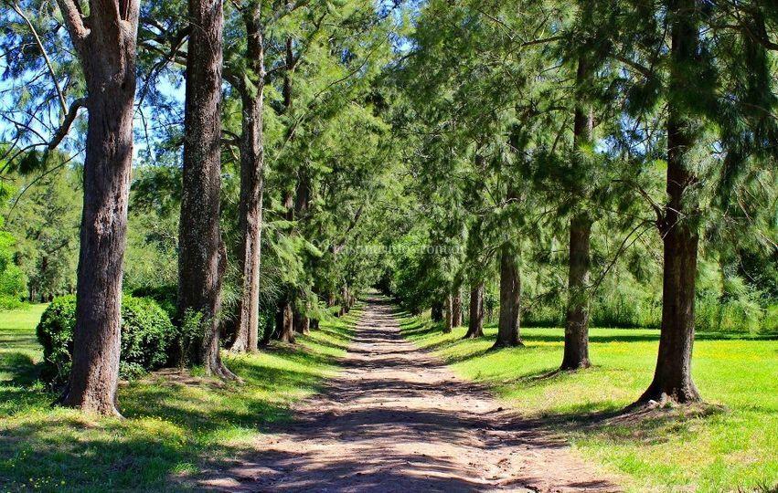 Bonito bosque