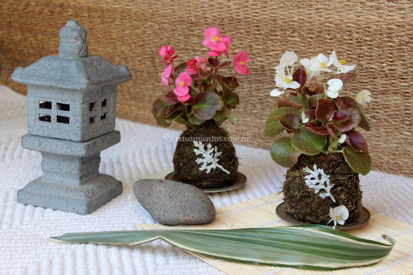 Little kokedama - begonia