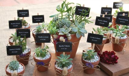 Ornamenta Plantas