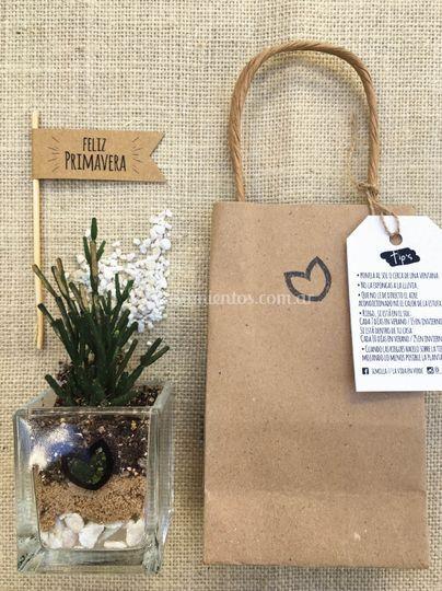 Mini terrario con bolsa