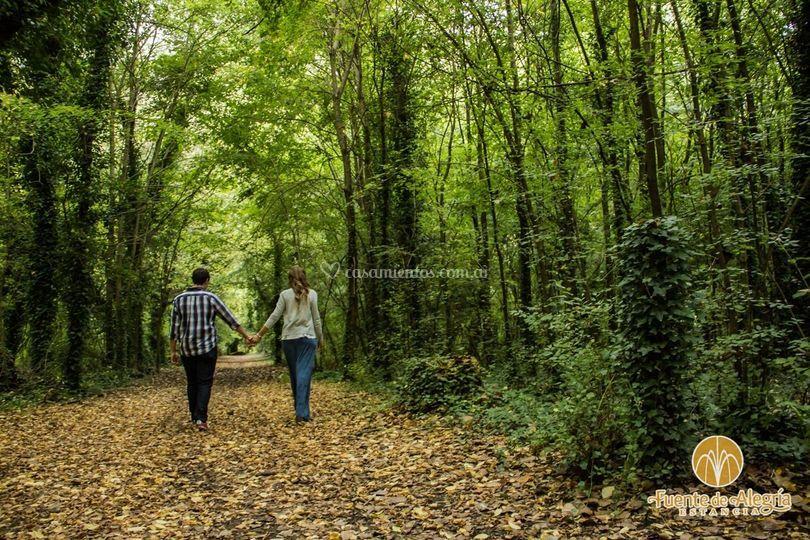 El bosque - fotografía
