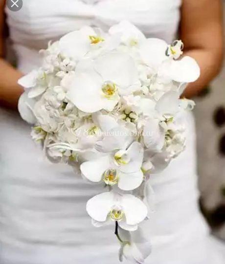 Orquídeas principescas