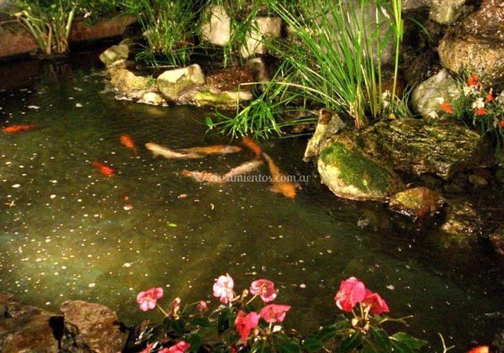 Cascada con peces