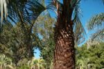 Recepciones en la Piscina de Quinta JR Ranch