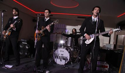 The Walrus Banda Beatle