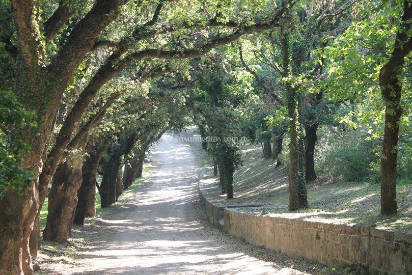 Camino a la Estancia