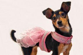 Katiko - Boutique para Mascotas