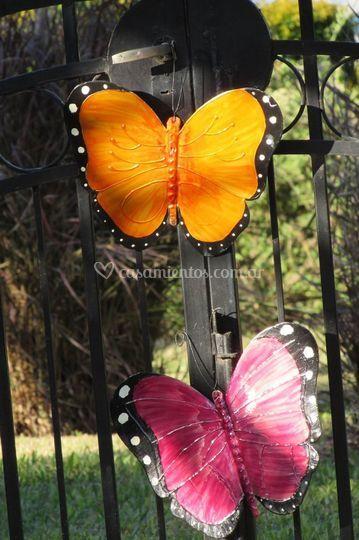 Mariposas color