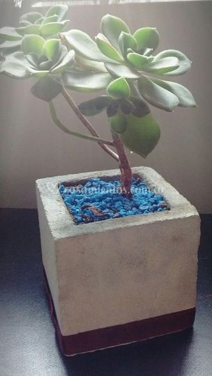 Macetas de cemento Nro 8