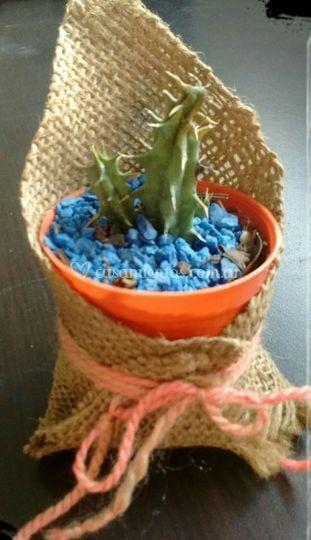Maceta plásticas con alpillera