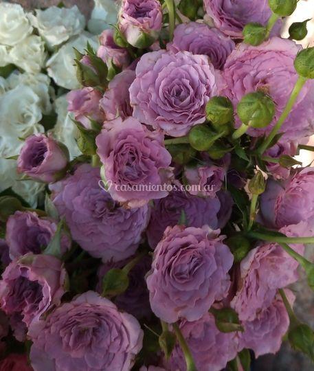 Rositas spray lilas.