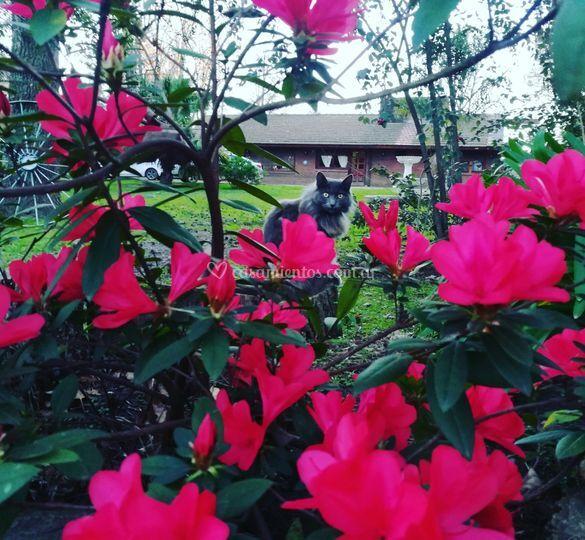 Jardin Sur