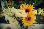 Arreglos florales de La Vittoria