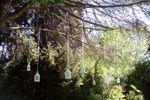 Faroles en el parque de La Vittoria