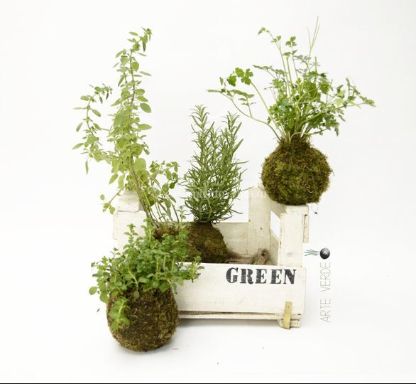 Hierbas aromáticas kokedamas