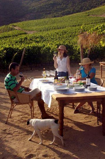 Almuerzo entre los viñedos
