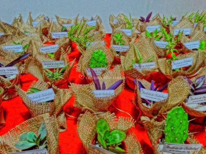 Souvenir de mini cactus y sucu