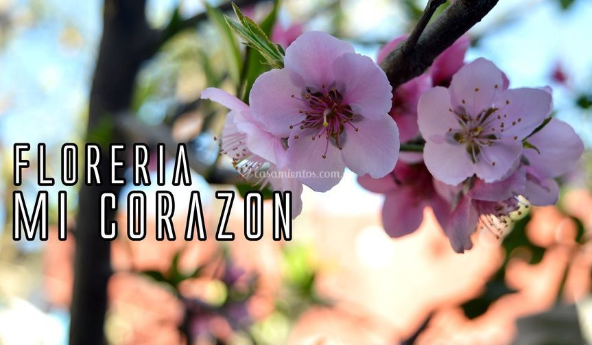 Logo Floreria Mi Corazon