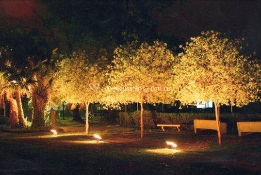 Árboles iluminados