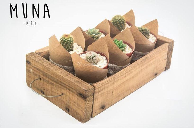 Souvenirs de cactus
