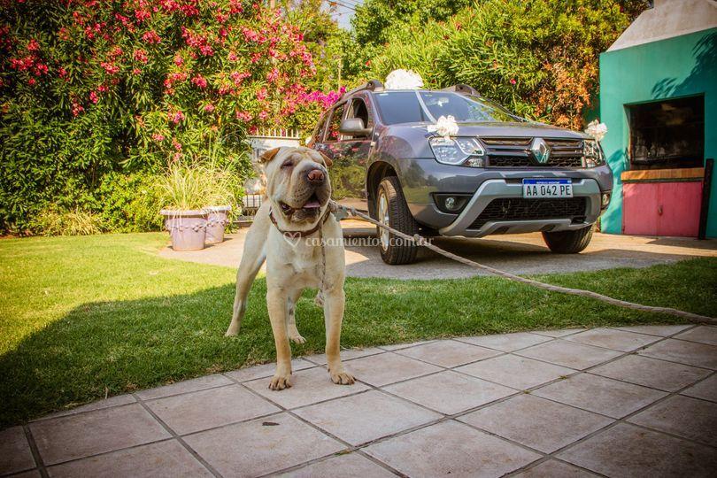 El perro y la camioneta