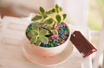 Cactus como souvenirs de casamiento: un detalle ecológico