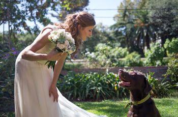 ¿Qué hacer con tu mascota el día de tu casamiento? 4 opciones ideales