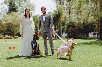¿Cómo incluir a su mascota en el casamiento?