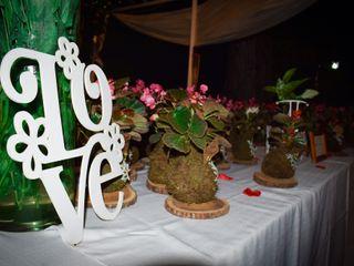Ornamenta Plantas 4
