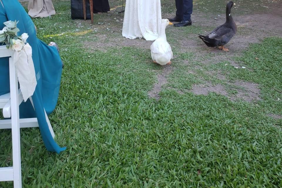 La Ceremonia - Ceremonias laicas 3