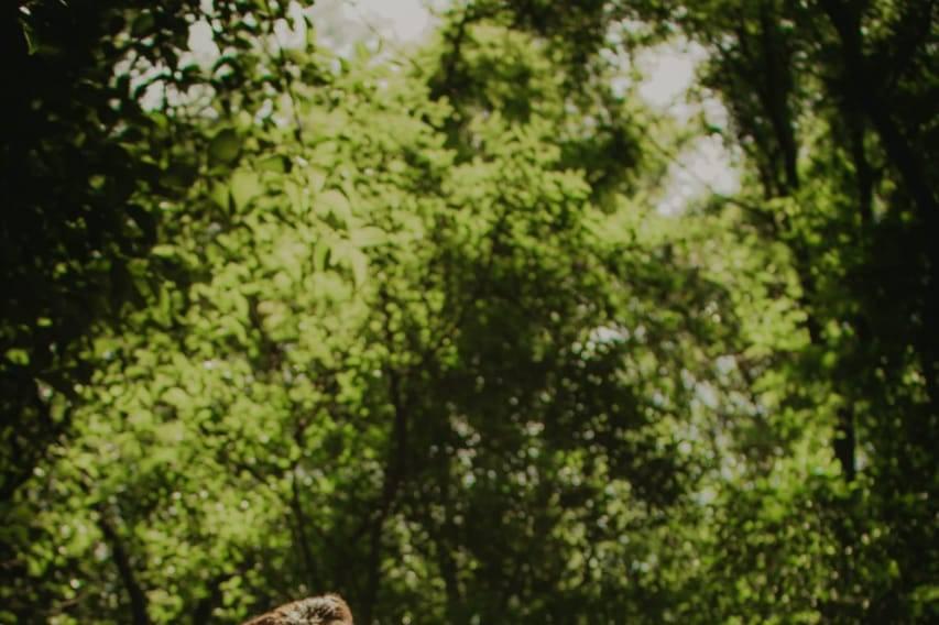 Bosque de Piedras fiestas & eventos 14
