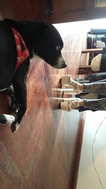 Mis zapatos!!! - 4