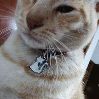 ¿Cuál de estas fotos vas a tener con tu gatito en el gran día? - 1