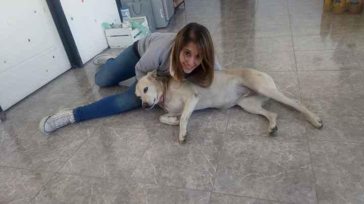 ¿Adoptarían una mascota?🐶 - 1