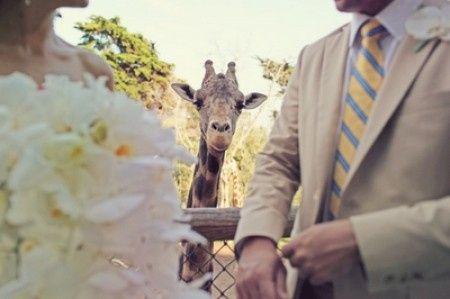 Casamiento estilo zoo