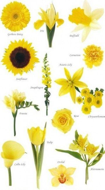 Tipos de flores para tu casamiento - Clases de flores amarillas ...