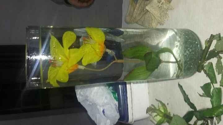 Probando  flores sumergidas. - 1