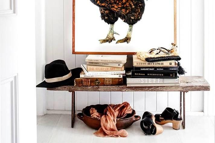Gallo, foto copello