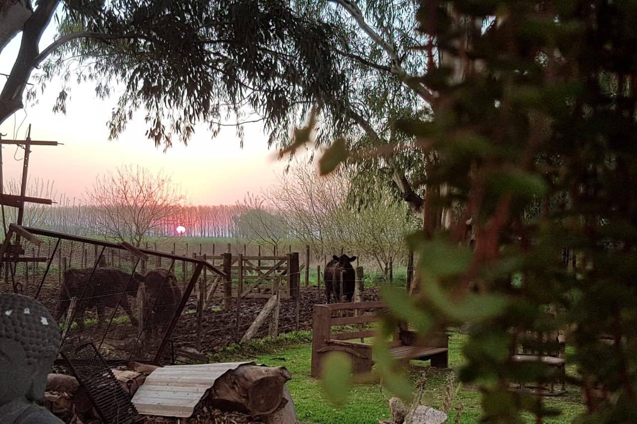 Prisma Rural
