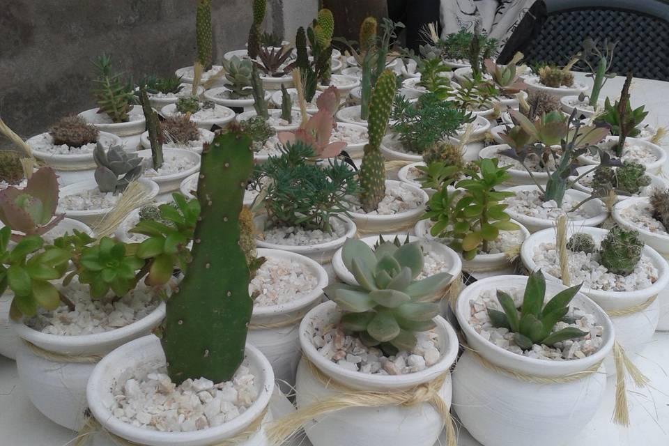 Plantas en cacharros de barro