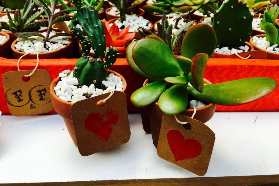 Souvenir cactus/suculenta