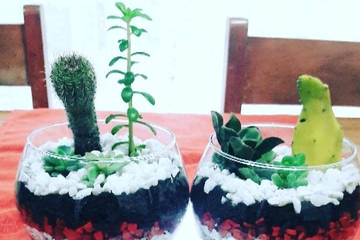Hermosos terrarios