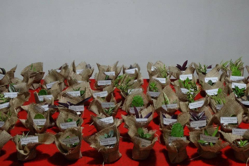 Sucus y cactus con arpillera